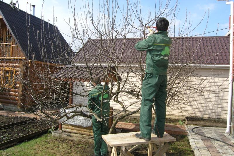 Способы прививки плодовых деревьев http