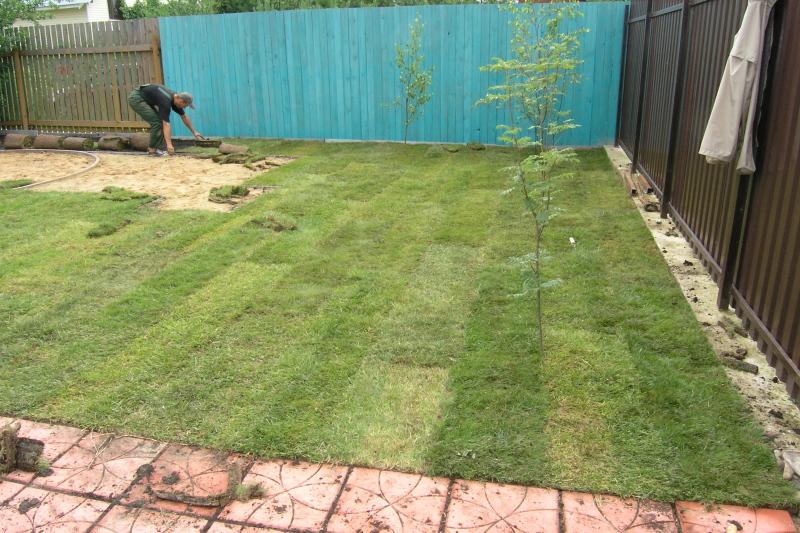 Как сделать ровный газон своими руками 62