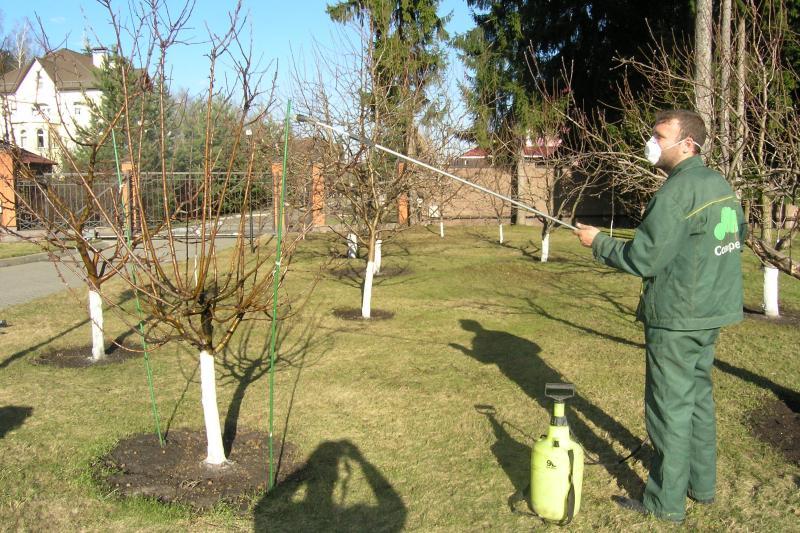 Чем обрабатывать садовые деревья весной