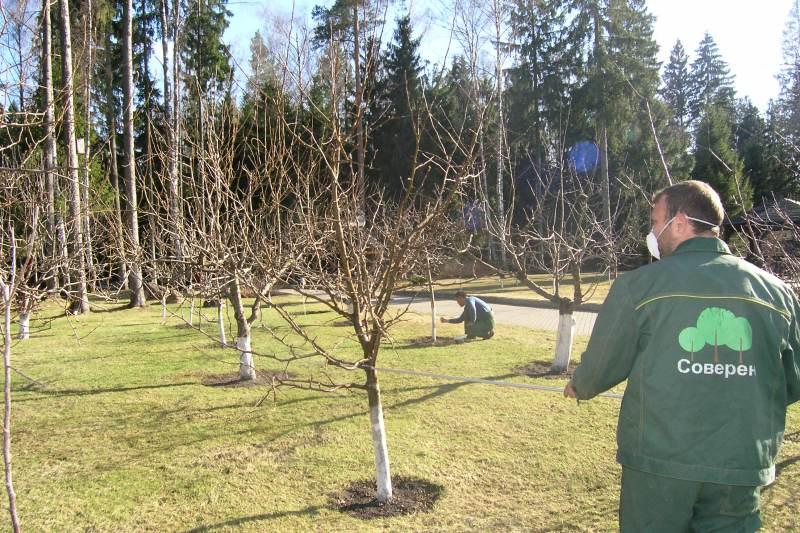 Опрыскивание фруктовых деревьев