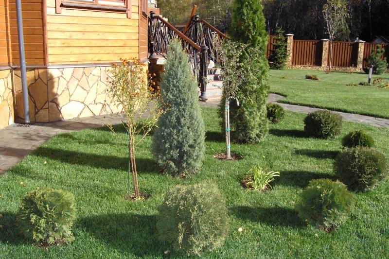 Какие деревья сажать в доме по фен шуй