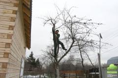 Обрезка взрослых деревьев