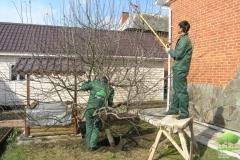 Специалисты по обрезанию деревьев
