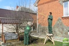 Садовники обрезают деревья
