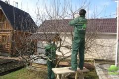 Садовники обрезают дерево