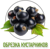 Обрезка кустарников